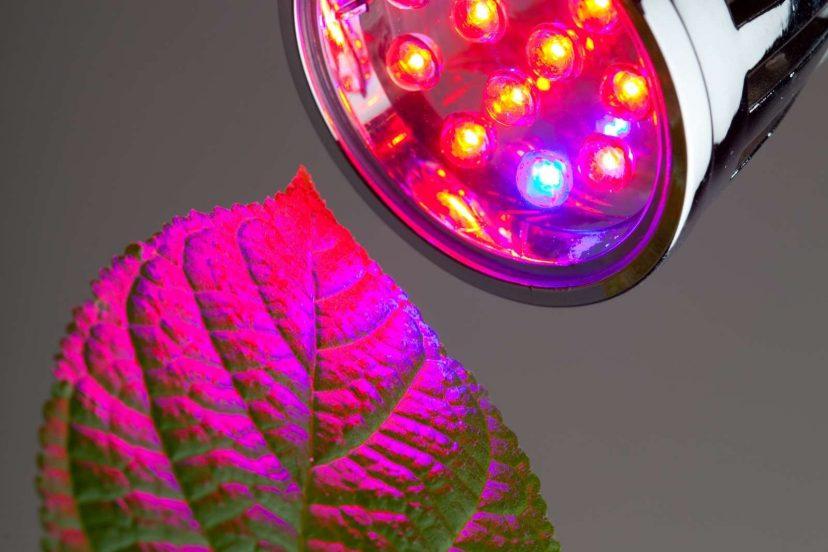 Top 6 – 1,000 Watt Led Grow Lights To Buy