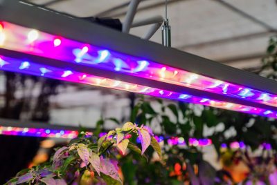 What Is The Best LED Grow Lights
