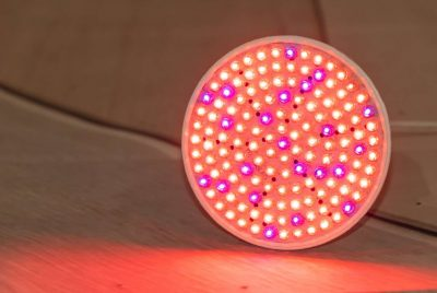 How To Choose The Best Grow Lights For Plants