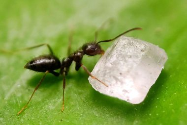 How To Get Rid Of Black Garden Ants Natural Ways