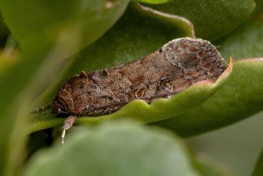 Armyworms Pest Control Solutions What's Safe And Effective
